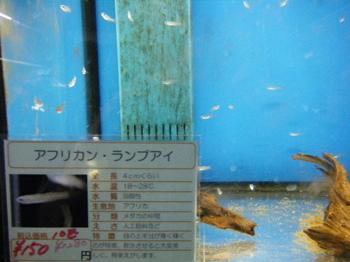 BLOG2010_1017アヒル0016.JPG