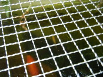 BLOG2010_0926アヒル0002.JPG